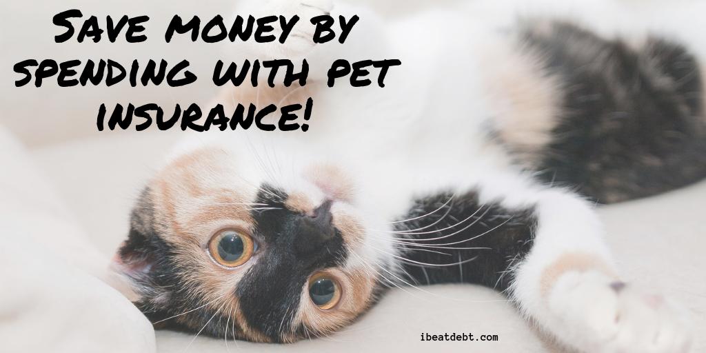 Pet insurance – saving money by spending money