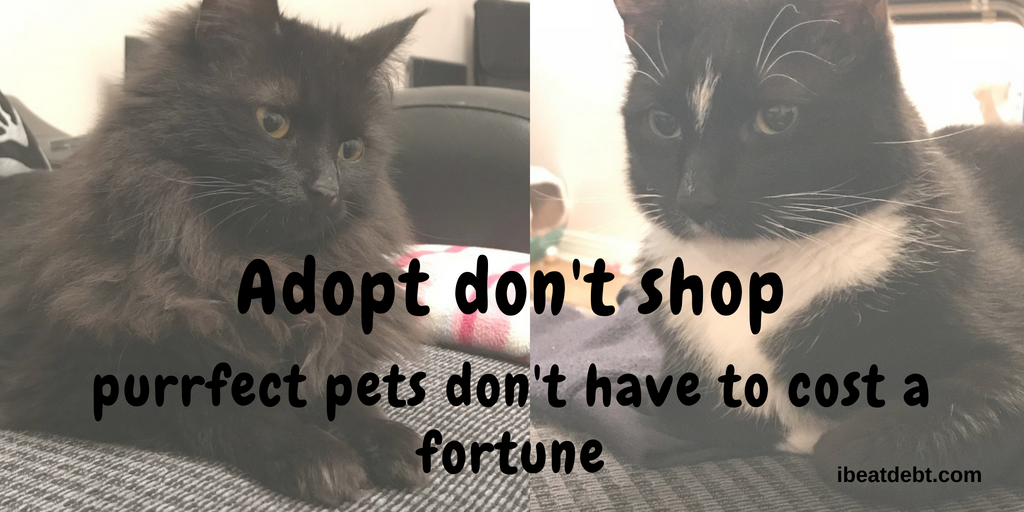 Adopt, don't shop - the purrfect pet doesn't need to cost a fortune!
